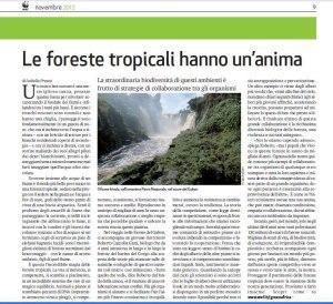 articolo-panda