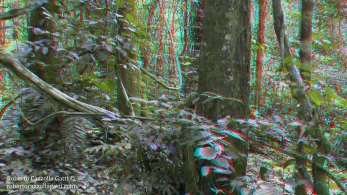 Foresta 3D