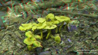Funghi 3D