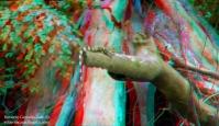 Iguana 3D