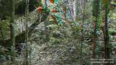 Intrico verde 3D