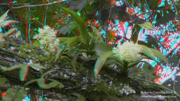 Orchidee epifite 3D