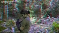 T e B foresta 3D