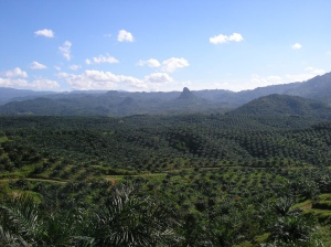 Oil_palm_plantation_in_Cigudeg-05