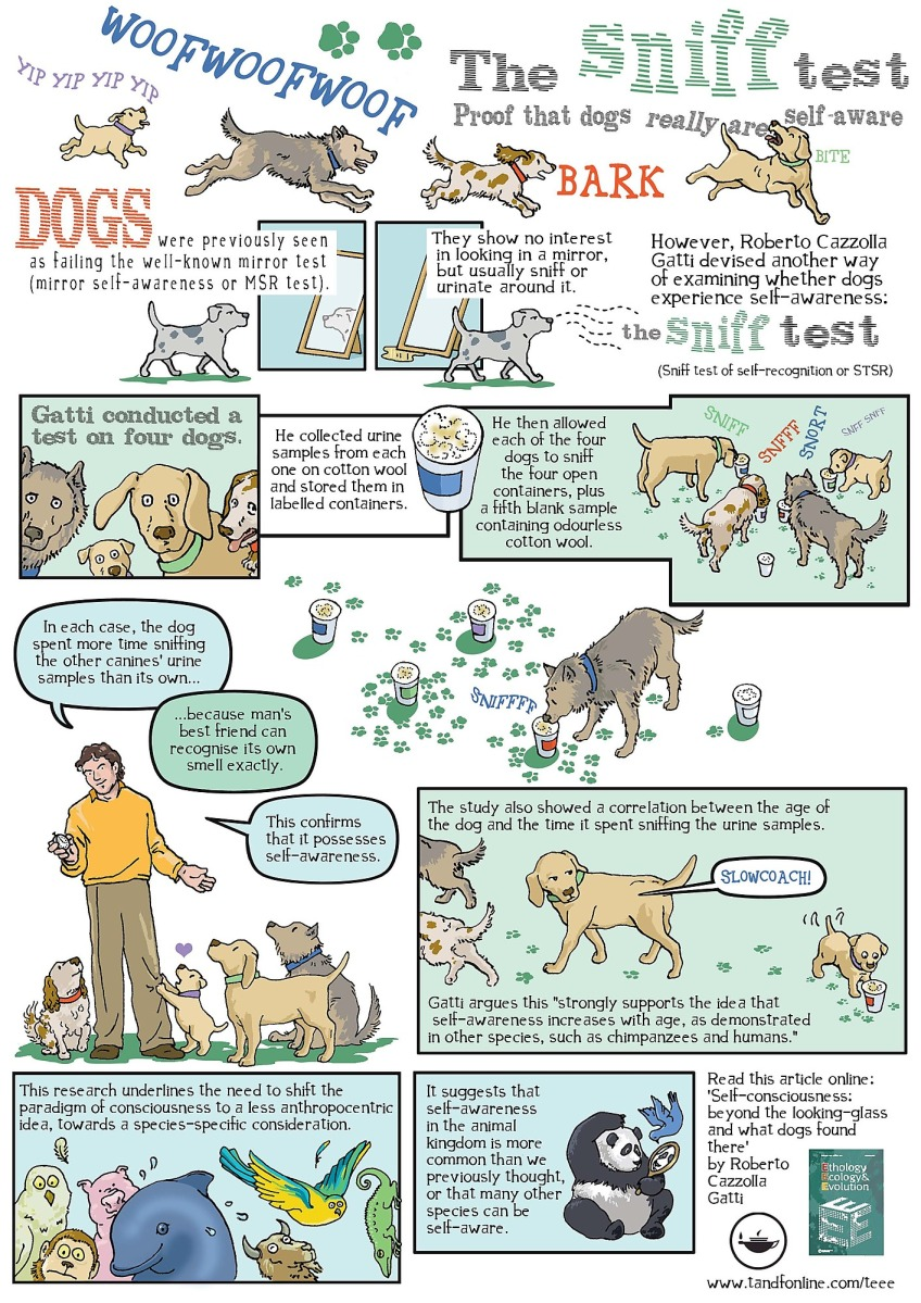 The sniff test of self-recognition confirmed: dogs have self-awareness