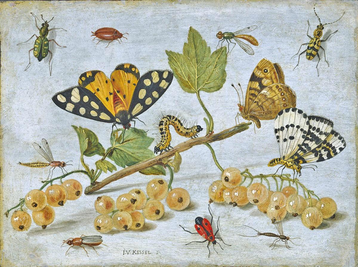 Il declino degli insetti è un'emergenza globale