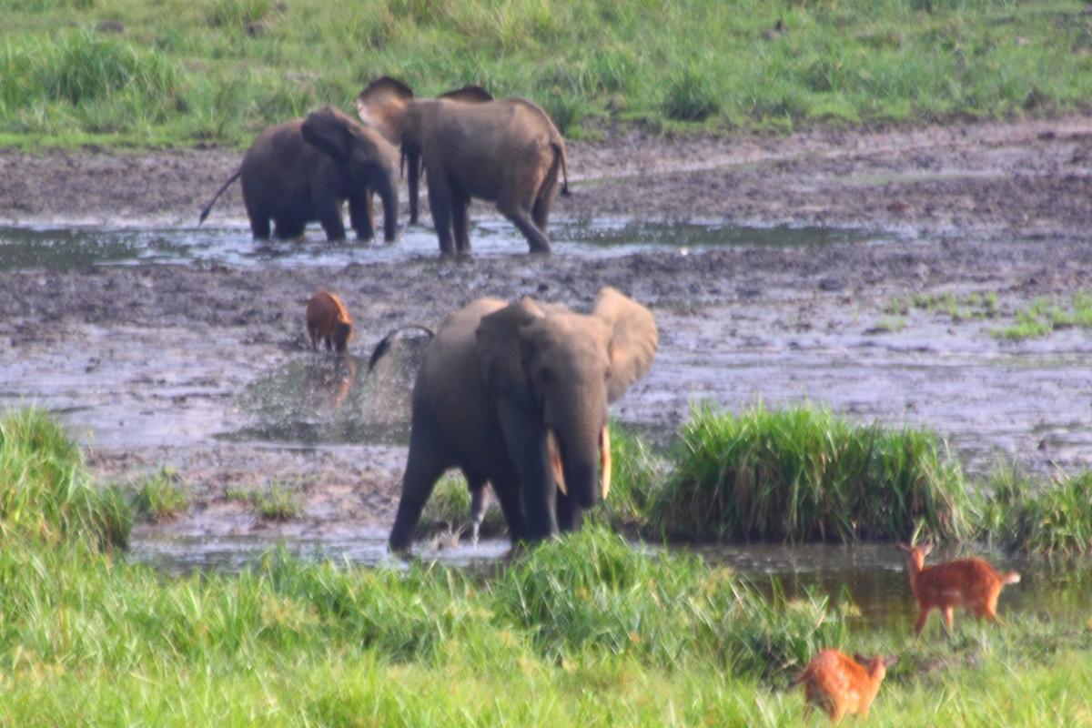 Alla scoperta di remote foreste e della loro biodiversità nell'Africa inesplorata